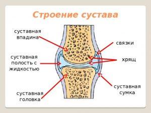Какие особенности строения сустава делают его подвижным пластика плюсне-фалангового сустава