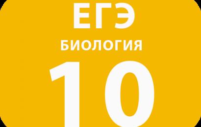 10. Установление соответствия