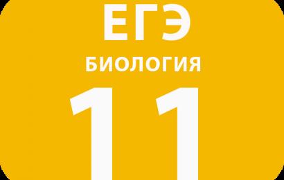 11. Установление последовательности