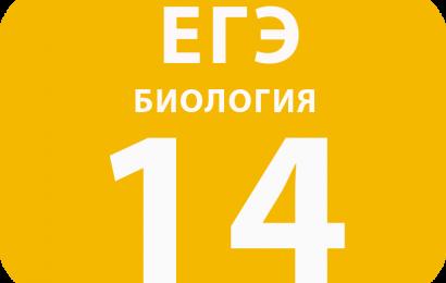 14. Установление последовательности