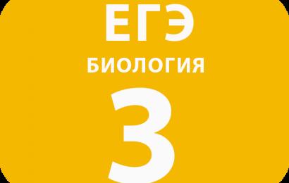 3. Задача на вычисление