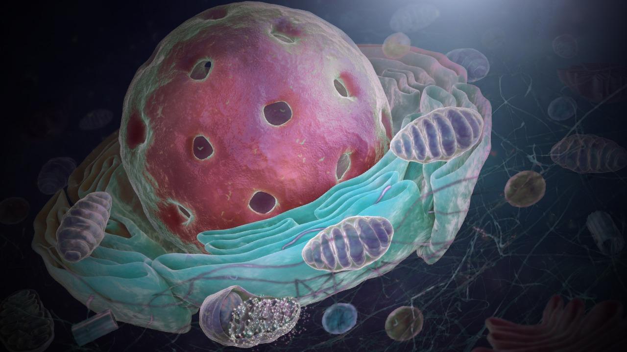Cell-Nucleus-IOW29