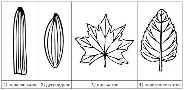 Лист под микроскопом рисунок