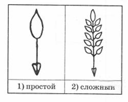 vpr-biologiya-5-2-4