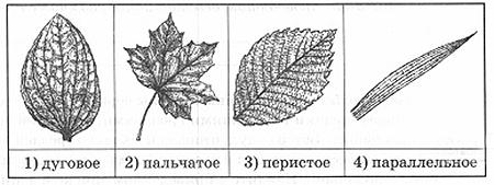 vpr-biologiya-5-2-5