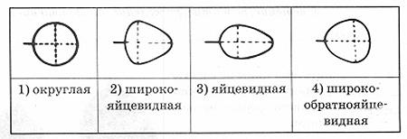 vpr-biologiya-5-2-7