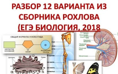 Разбор 12 варианта ЕГЭ по биологии Рохлов 2018
